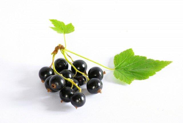 Цветки розовато-серые, собраны в поникающие кисти.  Плод - черная, душистая ягода, содержащая многочисленные семена.